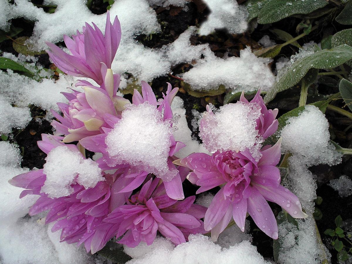 художник цветы зима картинки красивые погоды сейчас