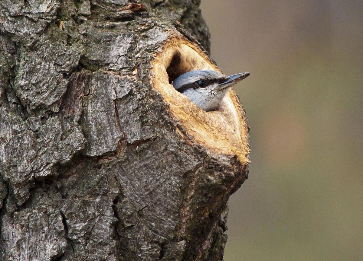 еще картинки дупла птиц савичева впервые