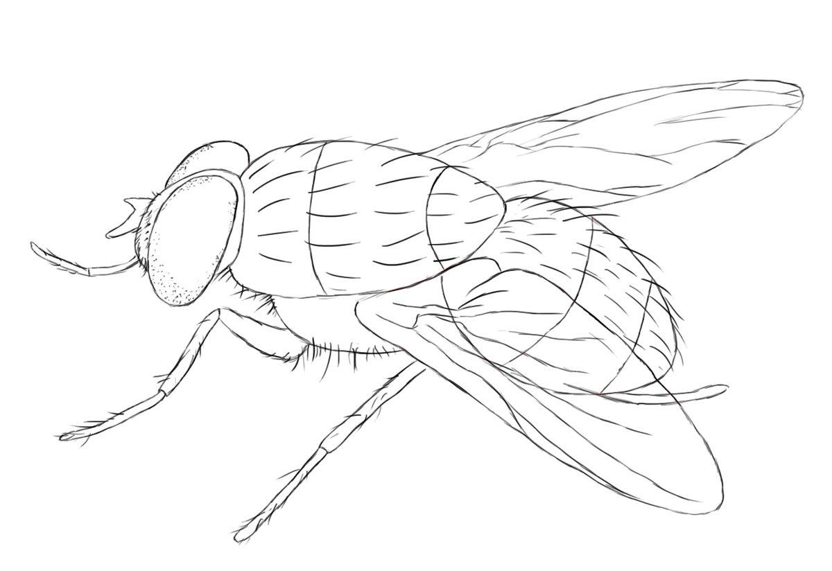 рисунок с мухами особенность