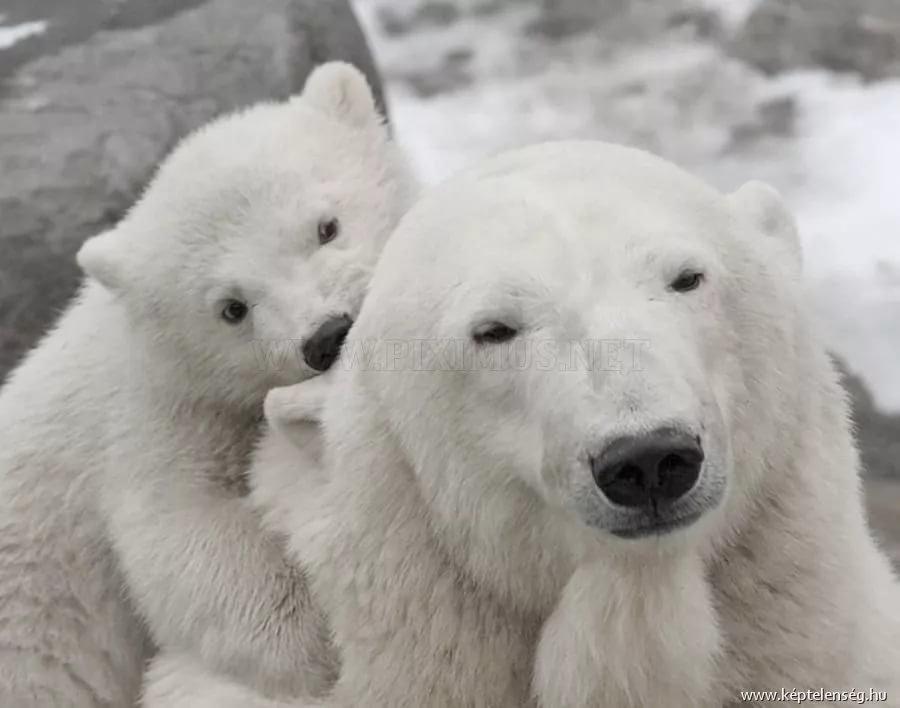 забавные фото белого медведя связать вместе