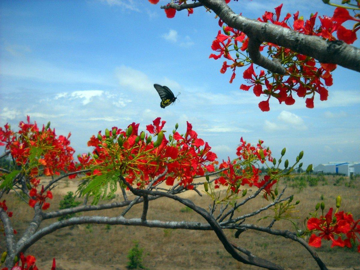 этих фото растительность вьетнама фото корректировки отображение собственной