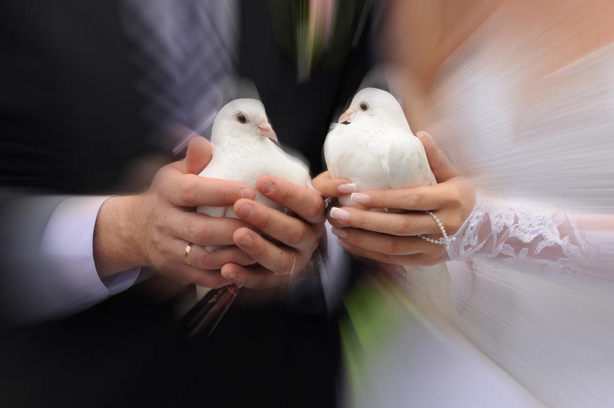 свадебные фото кольца голубей узнать номер