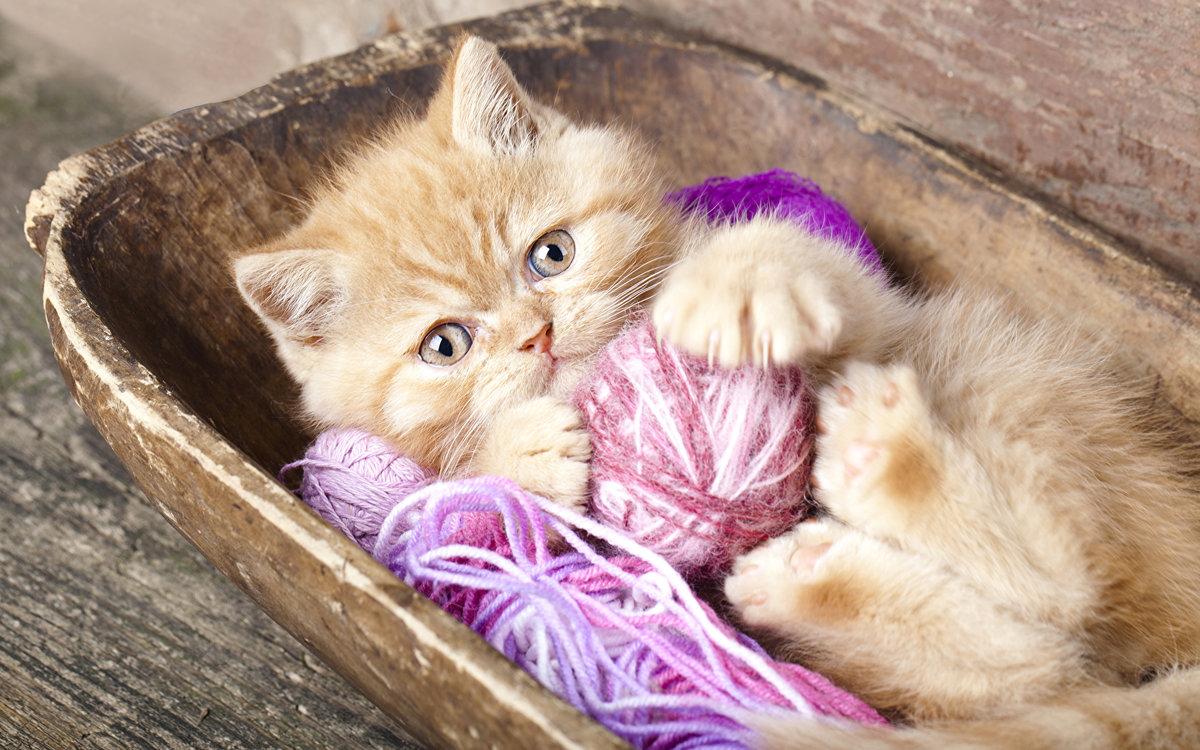 Новогодним драконом, красивые картинки с веселыми котятами