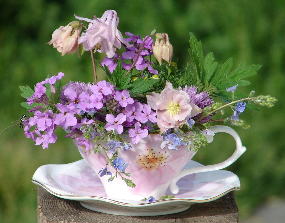 Картинки для, картинки цветы добрый день