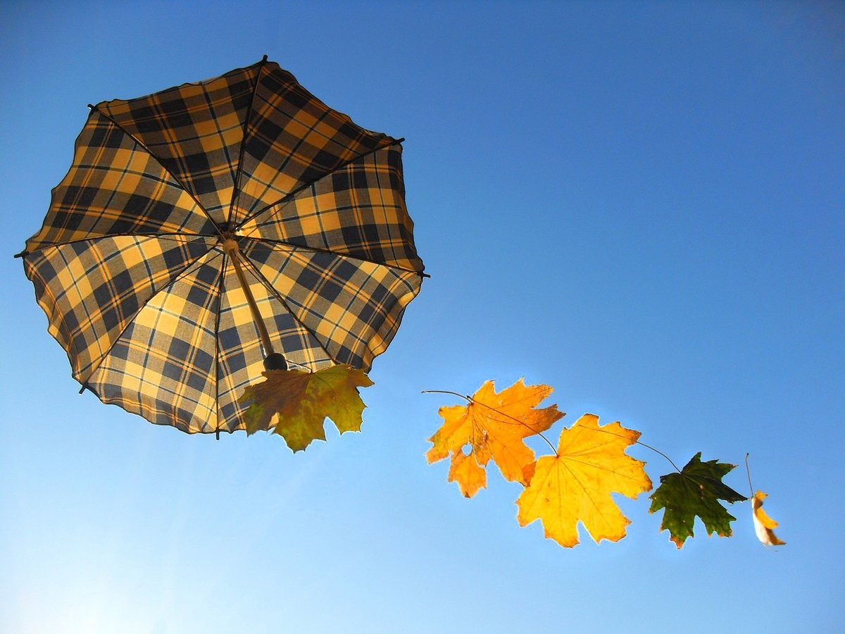 Открытка зонт из осенних листьев на зеленой траве, дню святого валентина