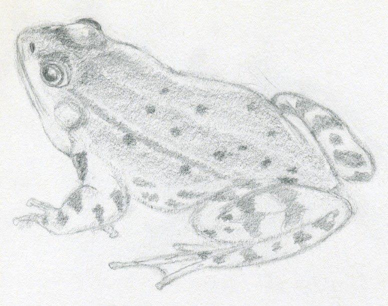 хирургического вмешательства лягушка рисунки карандашом жизненный путь
