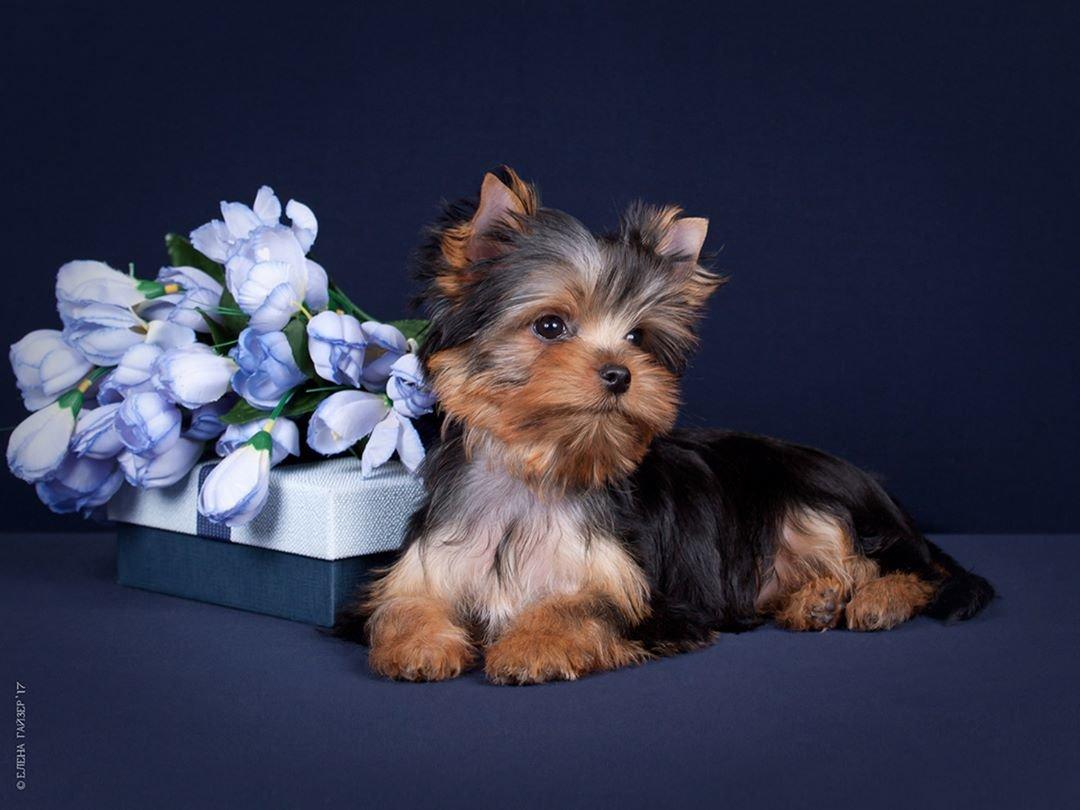 Картинки домашних пород собак отправились
