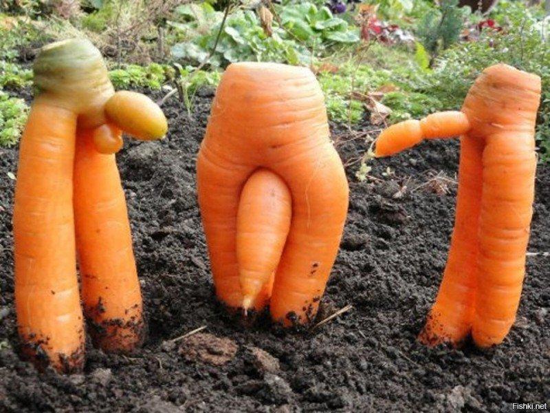 Прикольная морковка картинка, блатные девушки