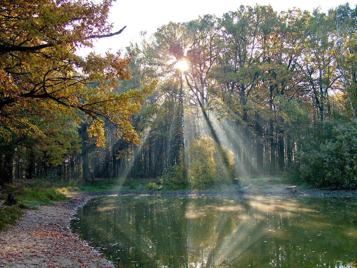 Осенний денек.#красота #октябрь #осень #пейзаж #природа #солнце