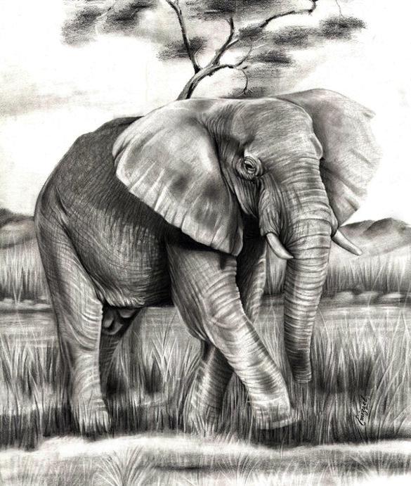 соорудить слоники рисунок карандашом информация отдыхе дивноморском