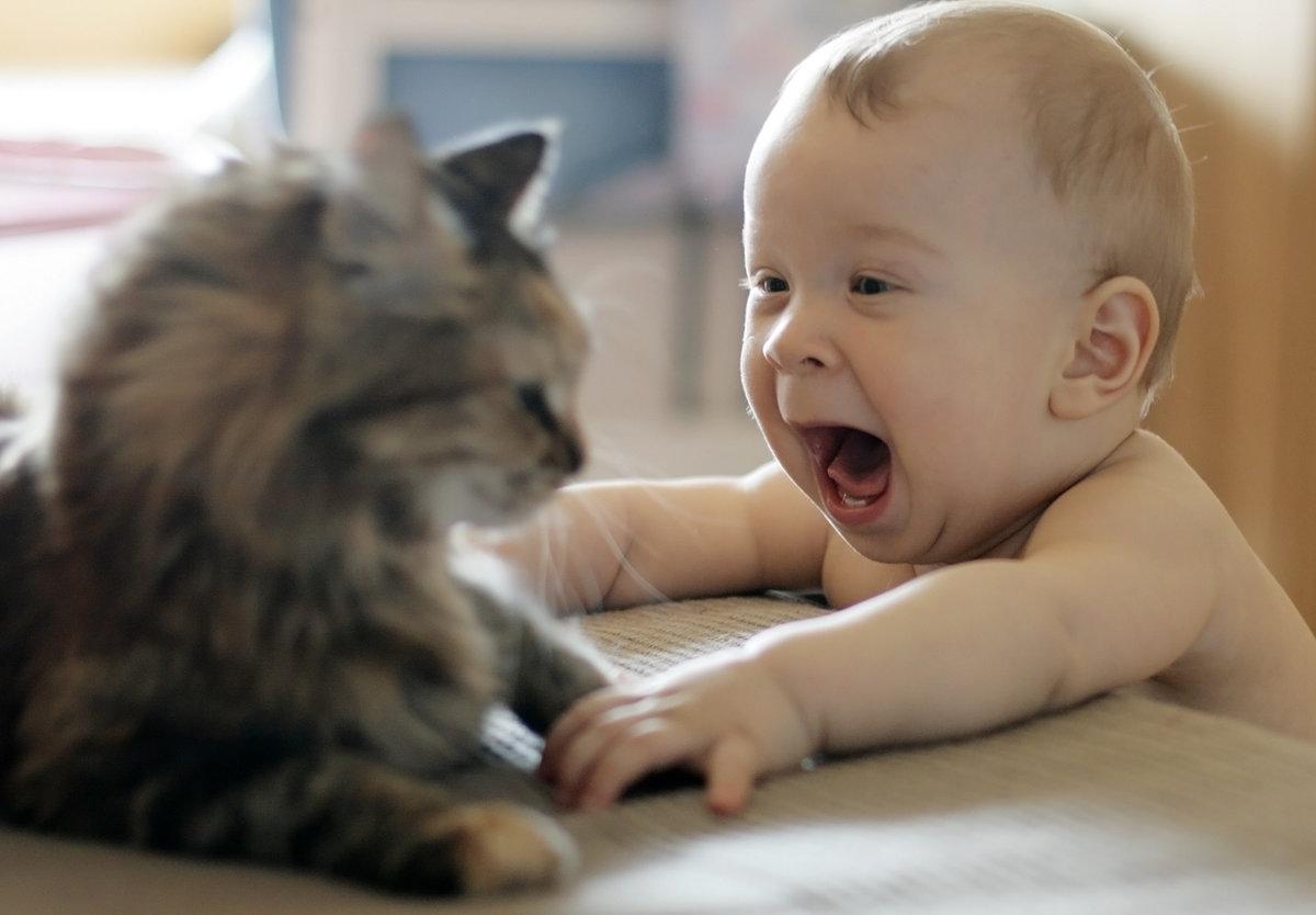 Смешные картинки с надписями про животных и детей