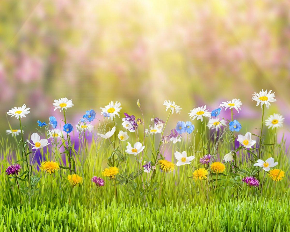 Открытка луговые цветы, девушкой парнем