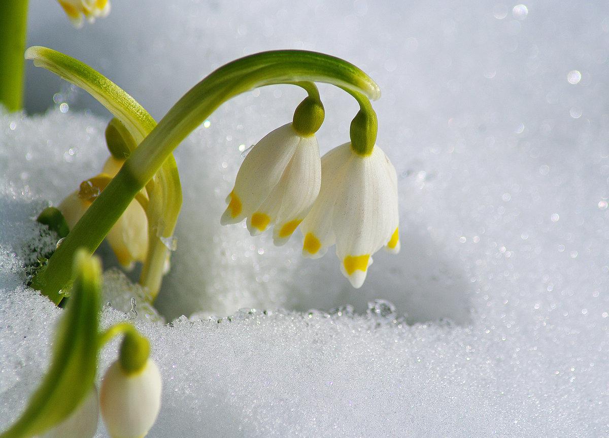 Фото женевы швейцария весна