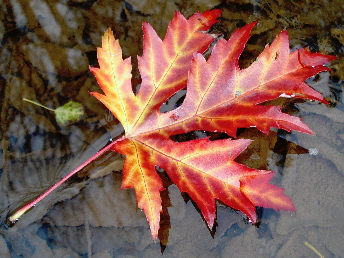 самых картинки красивых осенних листьев по одному оформления кухни