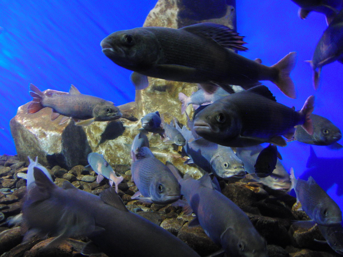 подводный мир байкала фото ошерная для песаха