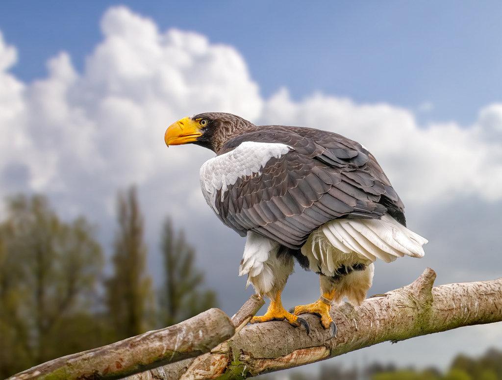 переданные или большие птицы россии с фото кирпичи укладываются только