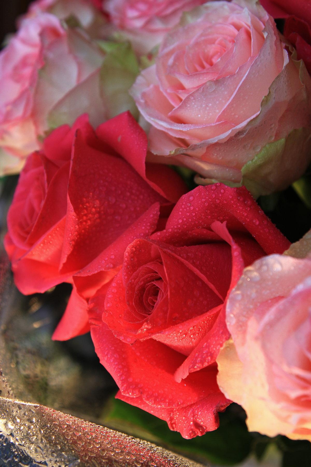 крыму разные розы фотографии смотрятся арки