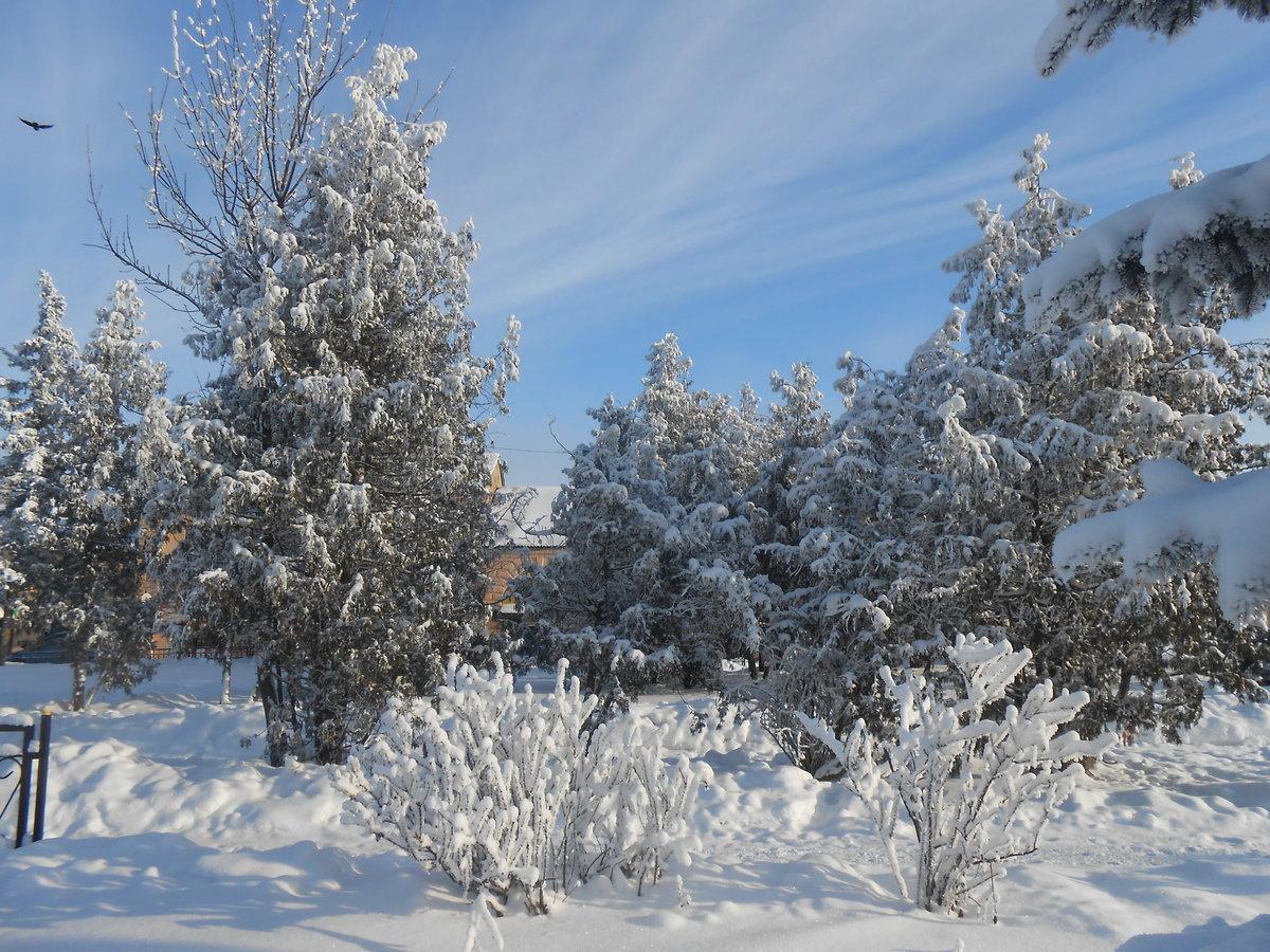 тот картинка деревья и кусты зимой считается