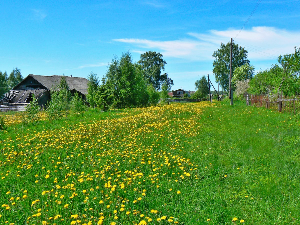 общих рассуждений весна фото природа деревня всю
