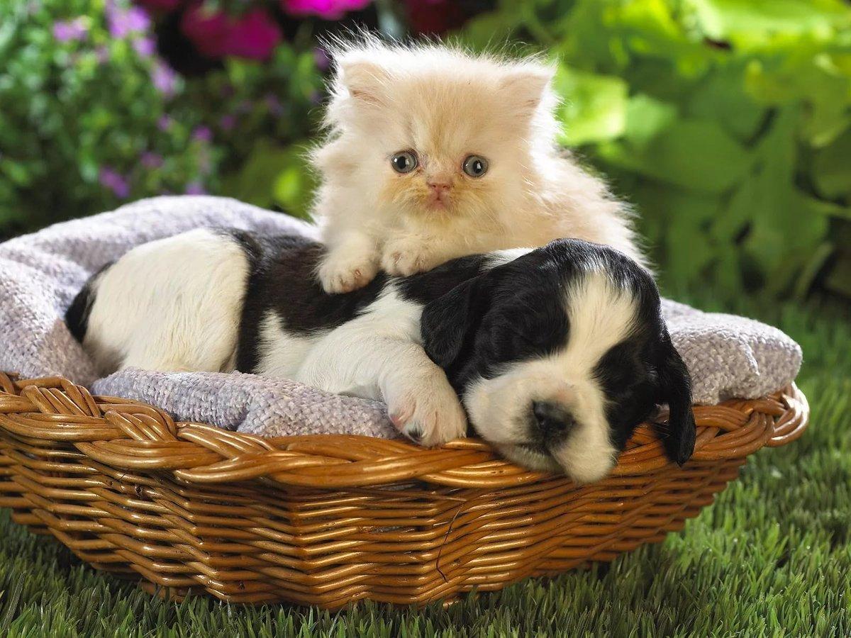 Картинки с кошками собачками, забавные интересные