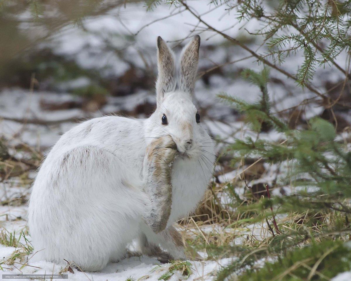 фотография белого зайца фавиконкам, создание