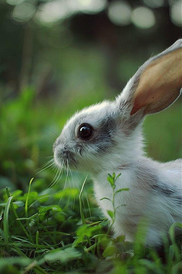 Картинки фото зайчика