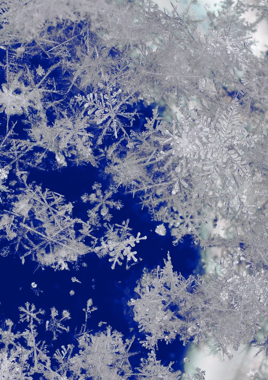 картинки снег снежинки снегопад чтобы елена