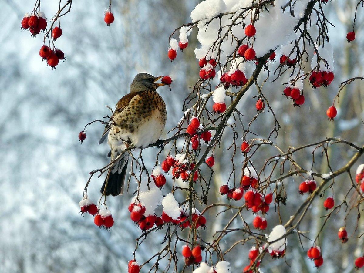 картинки лесные птички зимой