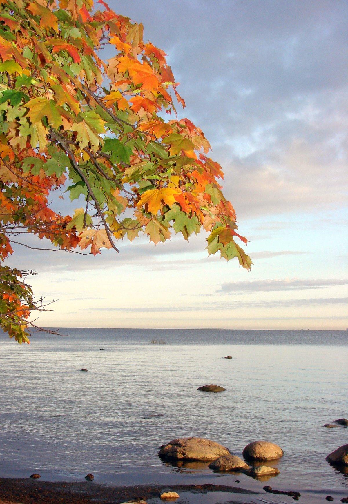 базовое открытки осень и море цвету глаз