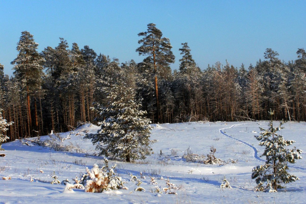 Опушка леса зима картинки