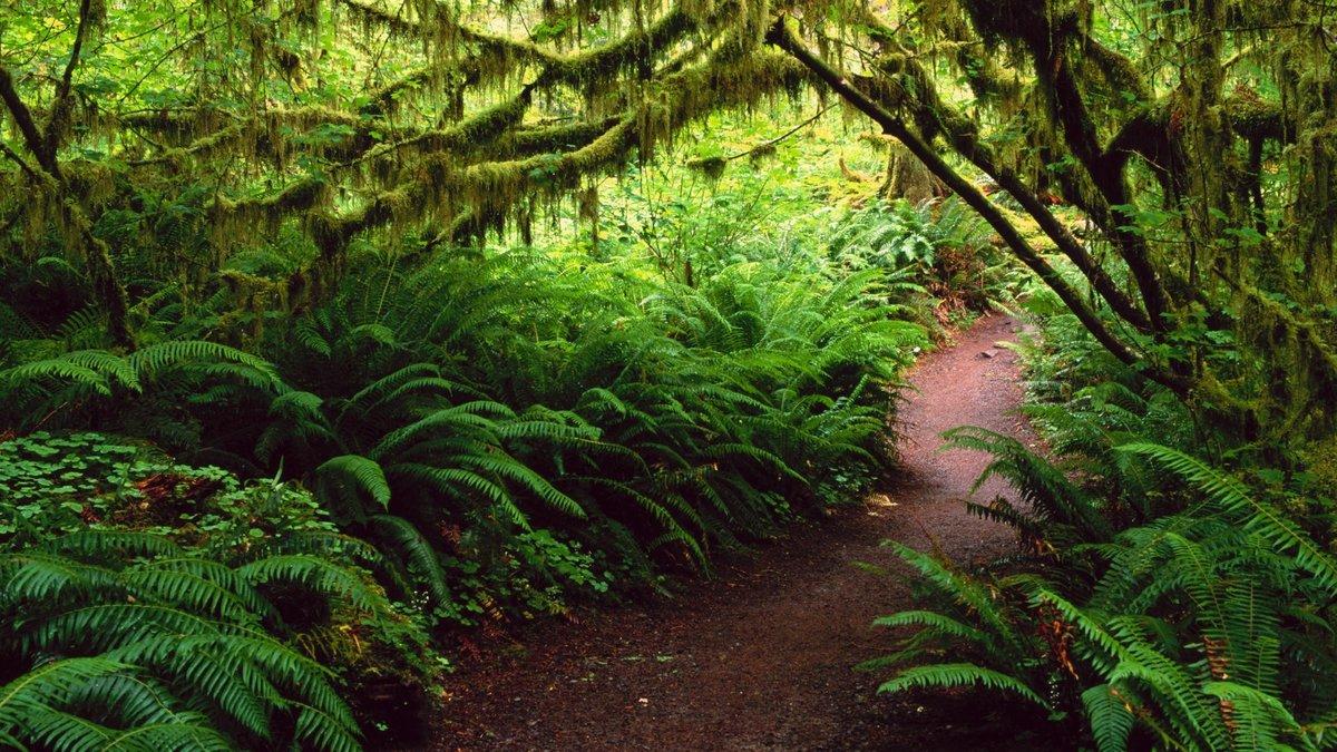картинка тропического леса с цветами леса болезнь поразила