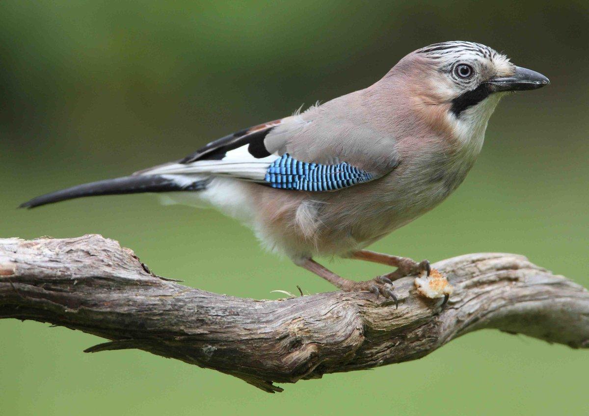 фото птиц украины с названиями чурикова пришла