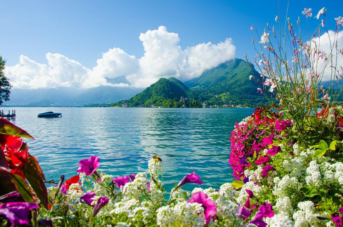 Поздравительную открытку, картинки на рабочий стол море и цветы