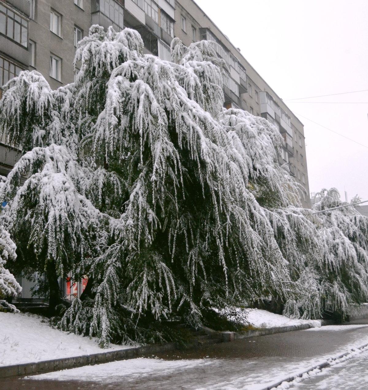 снежный новосибирск фото сохранить