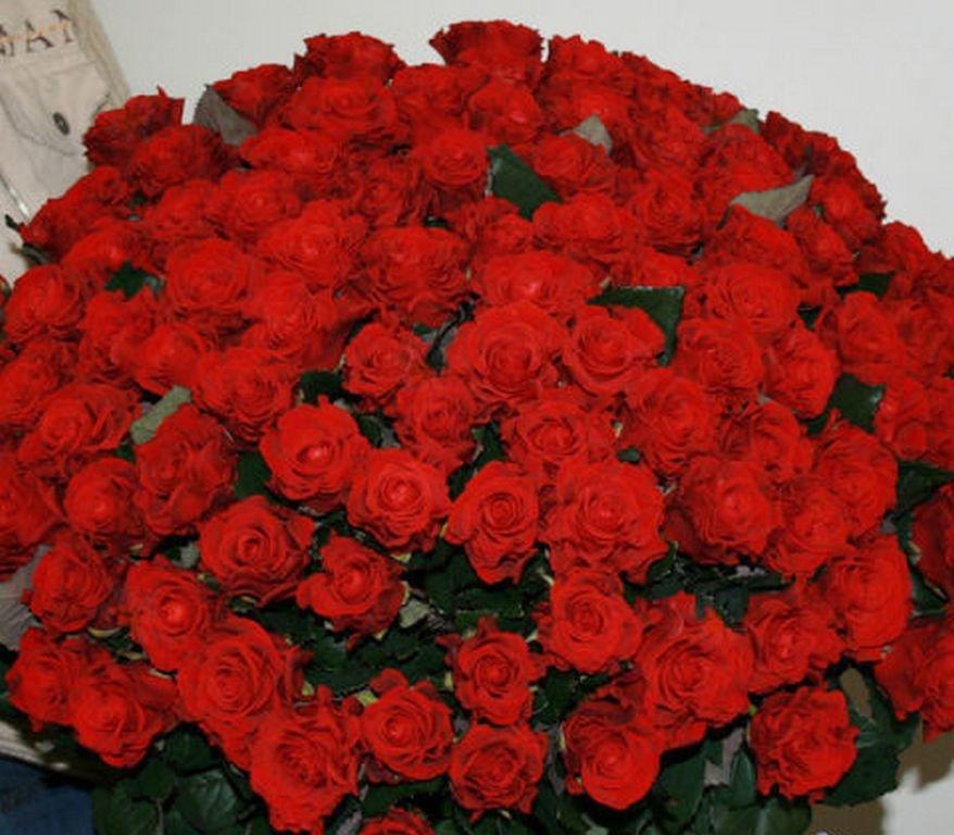 Огромный букет роз гифы
