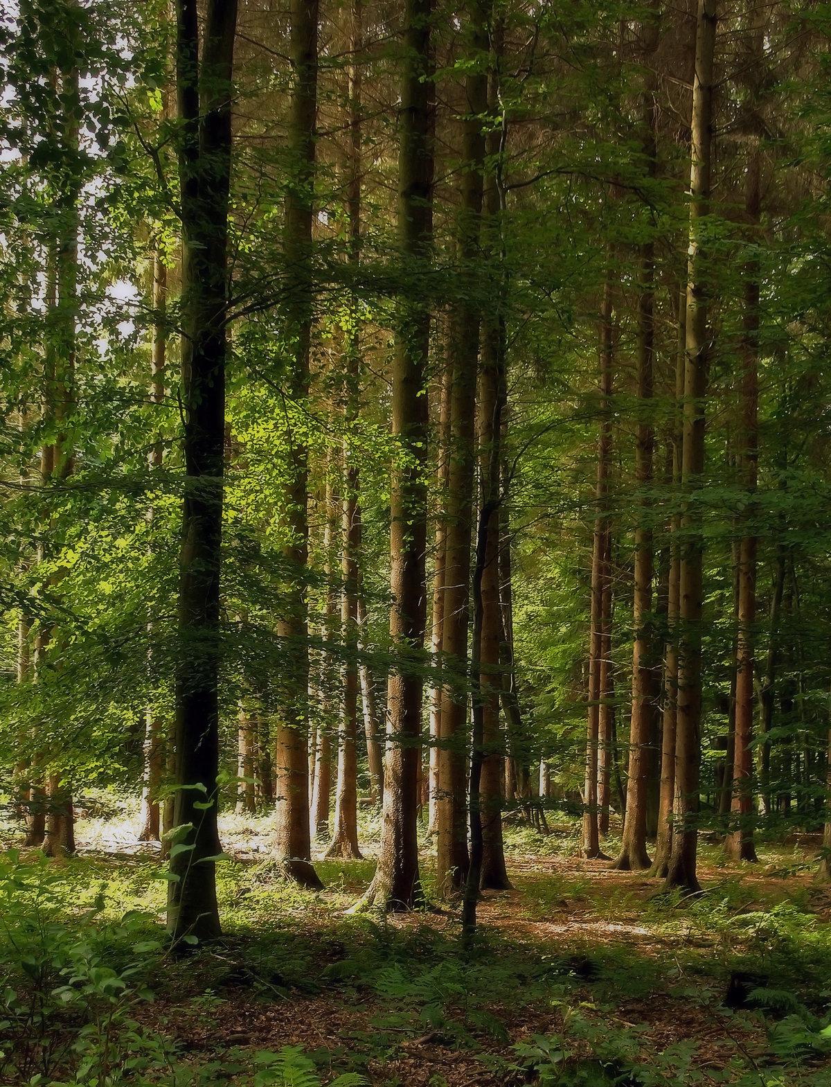 картинки лес картинки лес первым днем весны