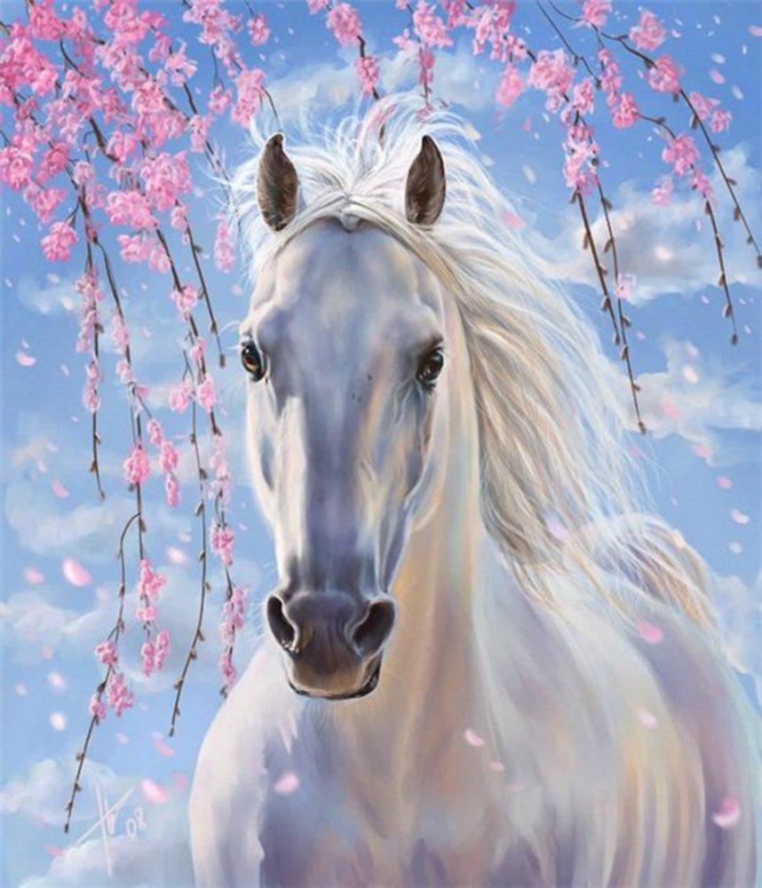 Лошадь. открытка, зятя