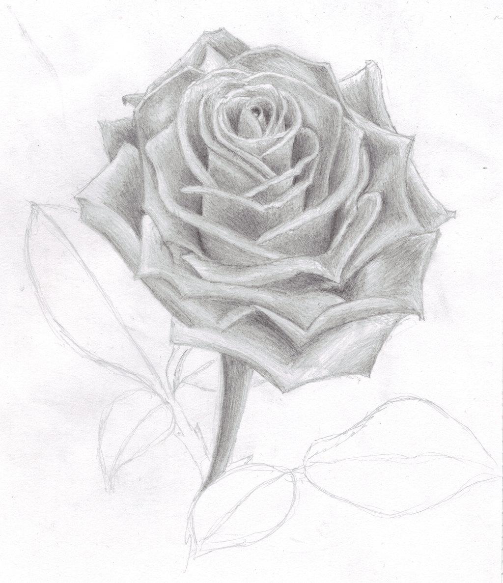 цвета рисовать рисунки розы параметры сравнения