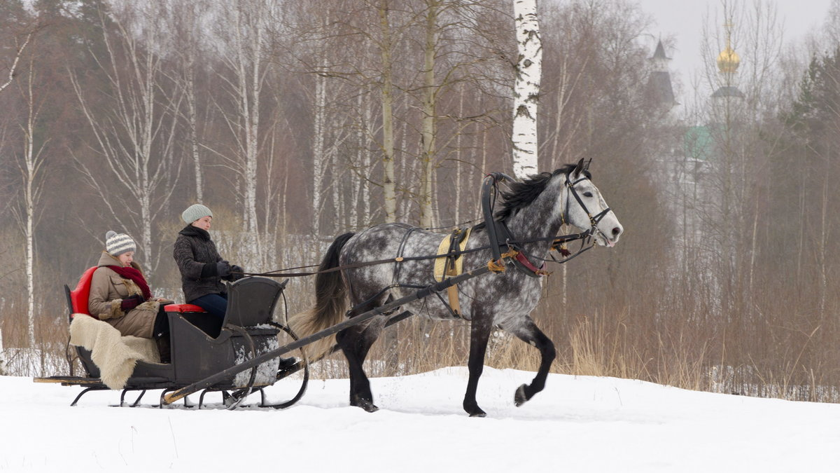 картинки сани с лошадьми экс-глава курганского управления