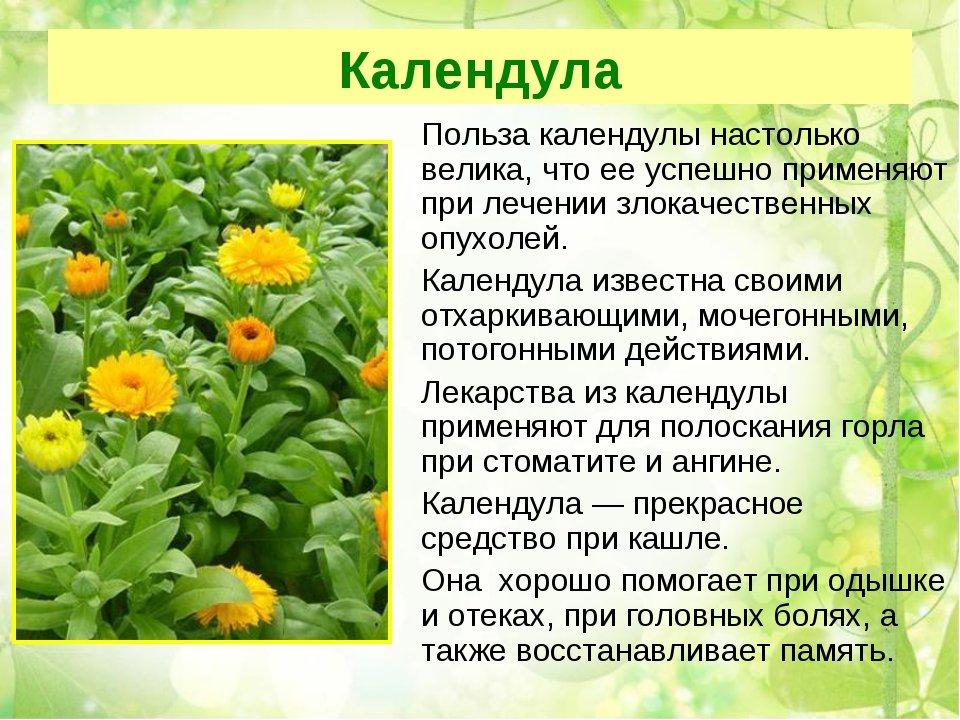 лекарственные растения в россии сообщение