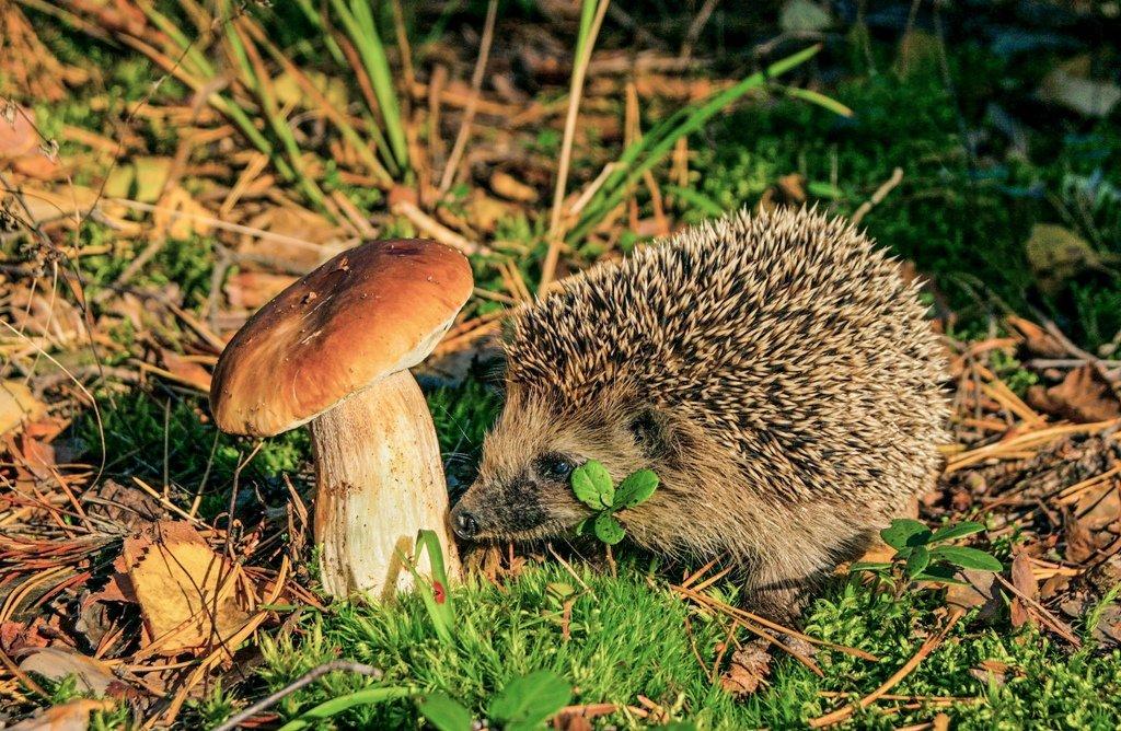 Картинка с ежами и грибами, открытки годик мальчику