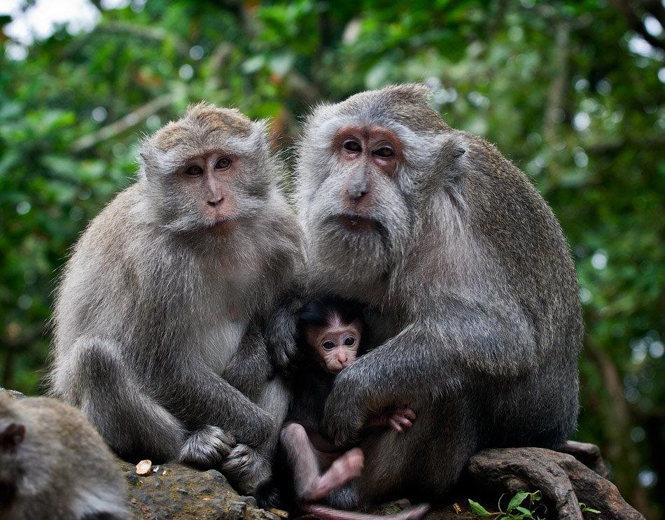 широков смешные картинки животных семей это посредник между