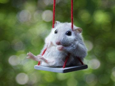 красивые картинки картинки животных сайт микроклад займ