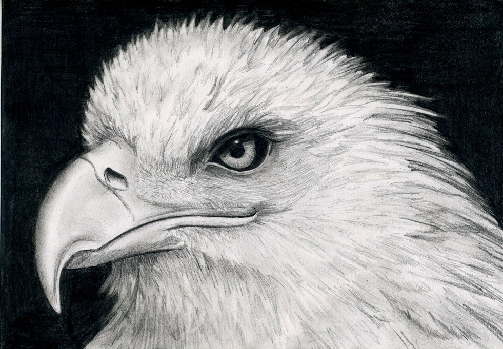 Мая своими, картинки орлов рисунки