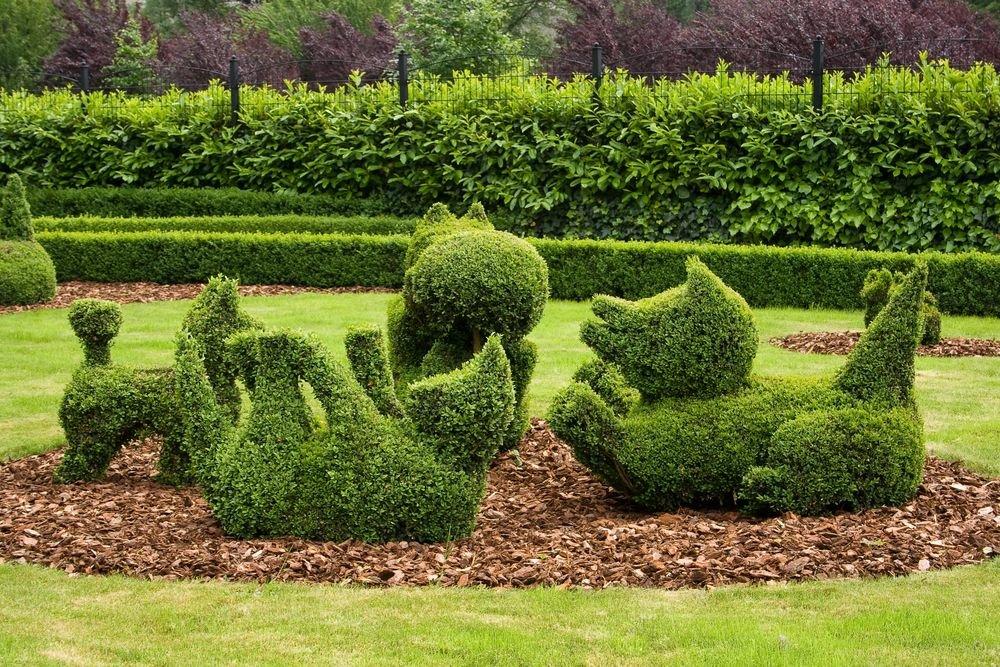различных стрижка растений в саду фото для зеркала пвх