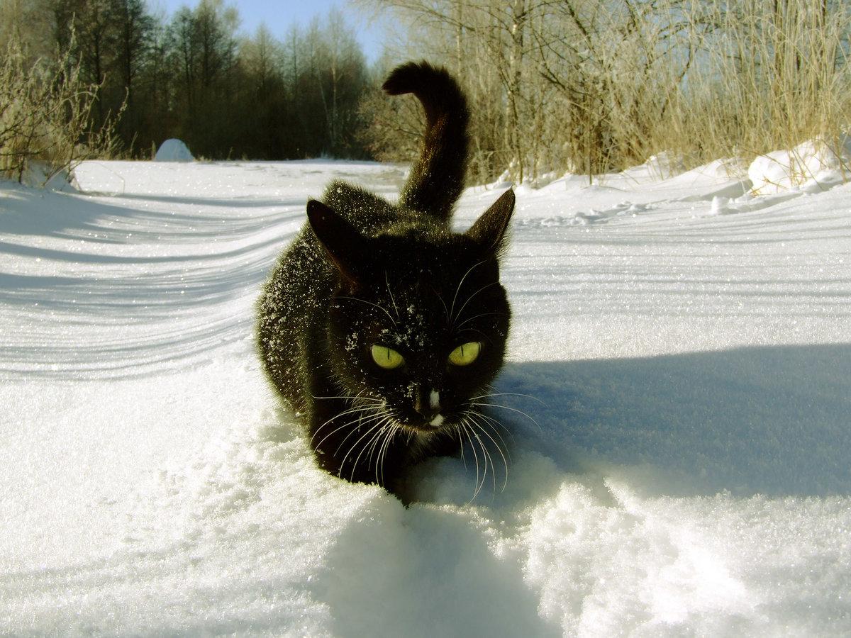 Картинки снег прикольные