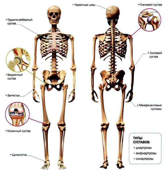 Гимнастика на суставы в картинках восстановление реабилитация после замены коленного сустава