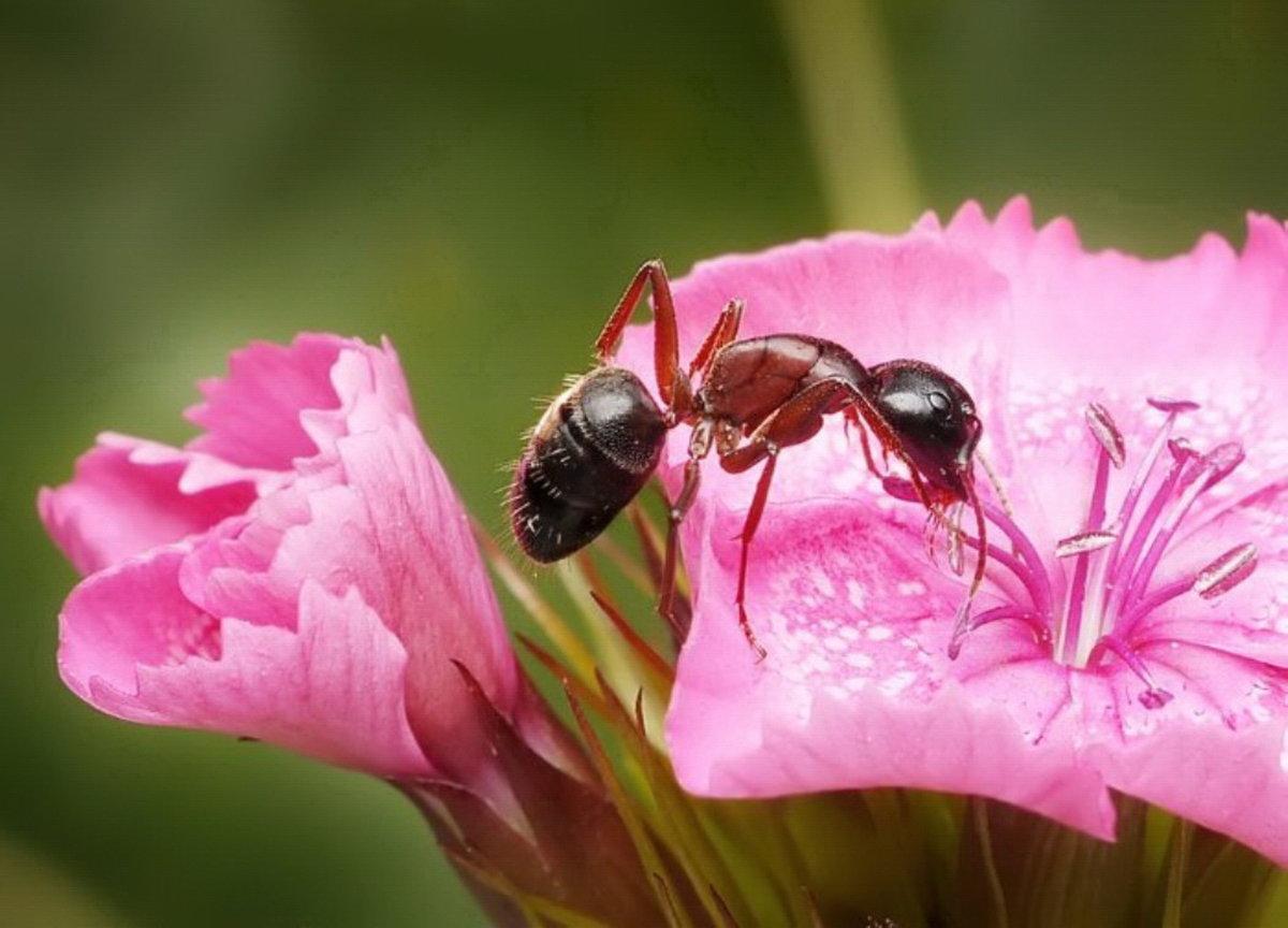 Красивые фото муравья