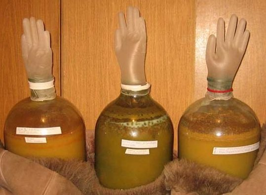 Производства сидра в домашних условиях 310