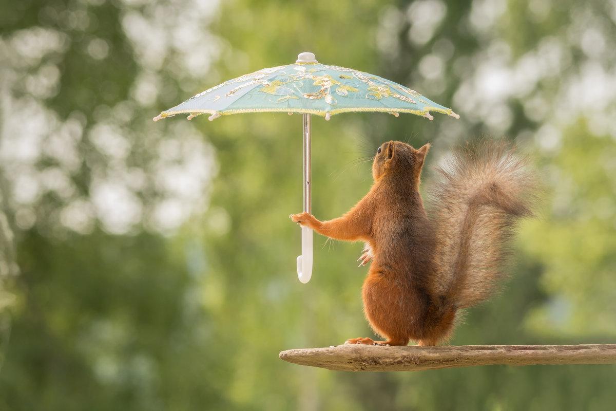 Открытке, погода прикольные добрые картинки